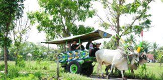 gerobag-sapi- di-desa-wisata-mlati-asuhan-omah-kecebong